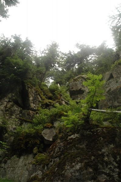 Stien vestfra ned til dammen er stupbratt, en provisorisk stige hjelper ...