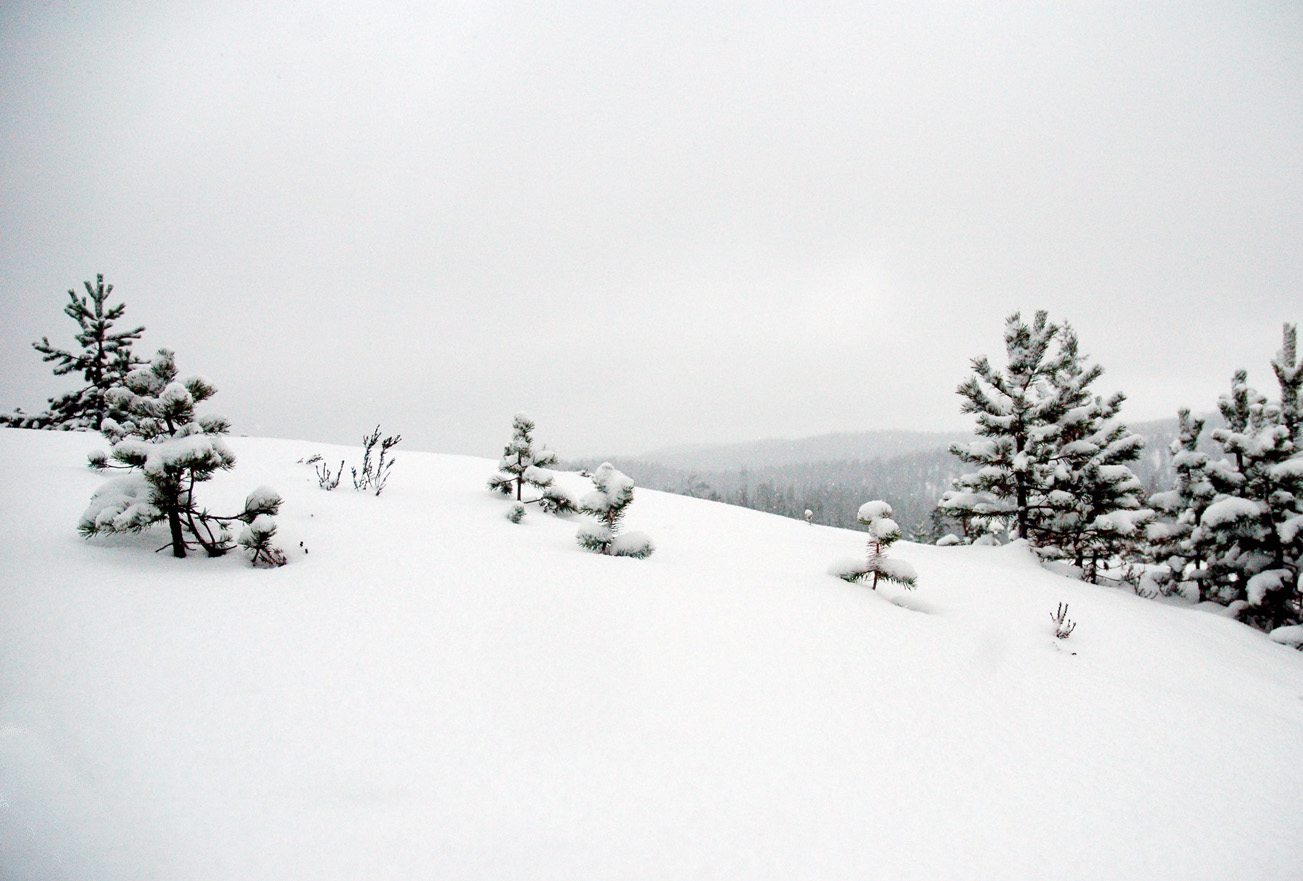 Finnemarka dekkes av et snøteppe og blir 99 % utilgjengelig