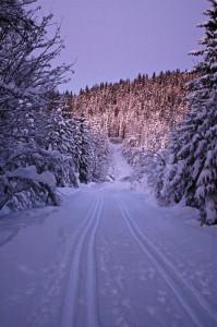 Løypa forbi Dypingen og Sandungen slynger seg gjennom sentrale områder av finnemarkas granskoger, med  fine terrengforhold.