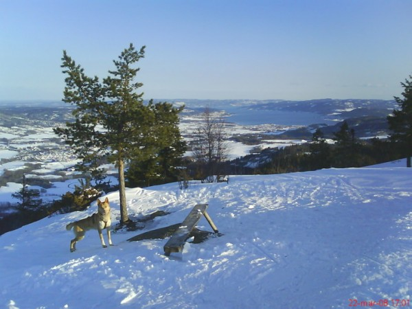 Storsteinsfjellutsikt mot Drammen