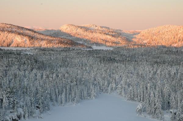 Skogsletta mellom Tverråsen, Hogskollen og Kampenhaug ser du her fra Tverråsen
