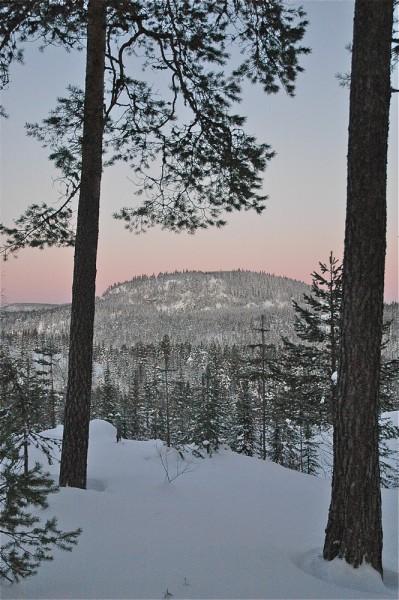 Fra den lange løypa Nygårdshøgda-Engersetra