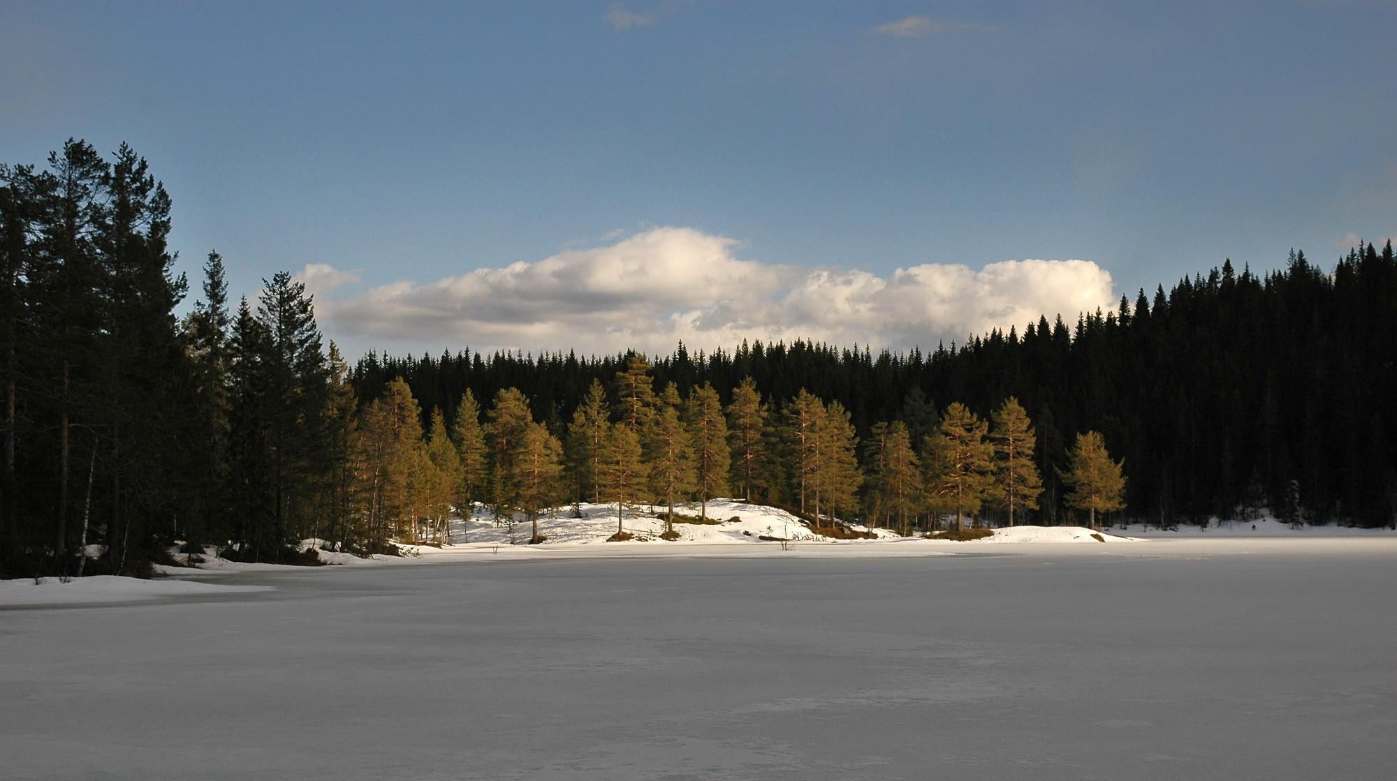 Skaren brakte meg til Svarttjern, dit går det ikke lenger skiløype.   Nå er ingen mål utenfor rekkevidde for skiløperen i Finnemarka..
