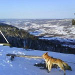 Ferex på Storsteinsfjell